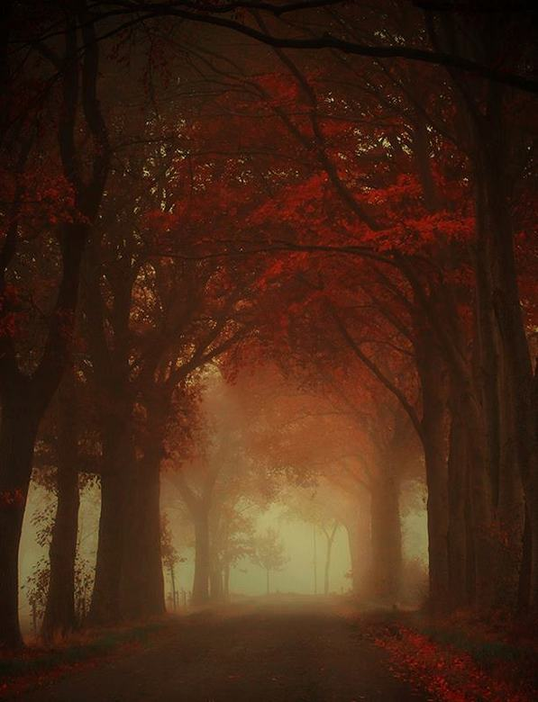 Autumn is a second spring when every leaf is a flower - Autumn.jpg