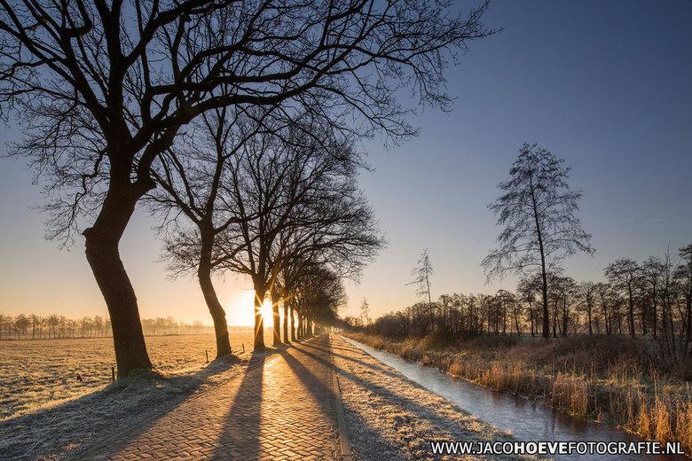 Koude opmaat van het voorjaar. - Genomen op 16 februari 2016 in Rouveen.
