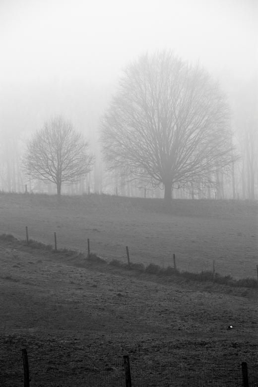 bomen en weide in de mist - In Arnhem. De compositie bestaat uit driehoekige vlakken. De ekster is een toevoeging in zwart-wit.
