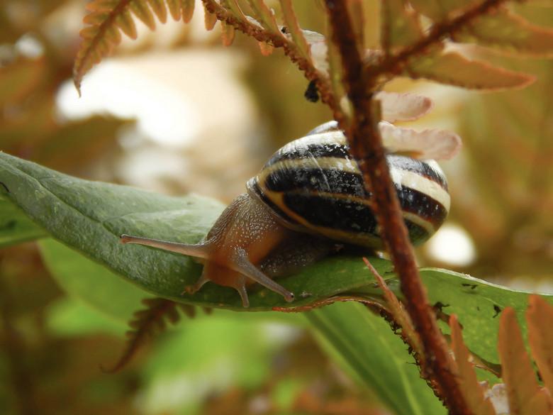 Hoogtevrees - Deze slak keek naar beneden.<br /> Het ging toch maar niet een blaadje lager, het volgde &#039;t gemaakte spoor van slijm weer terug, h
