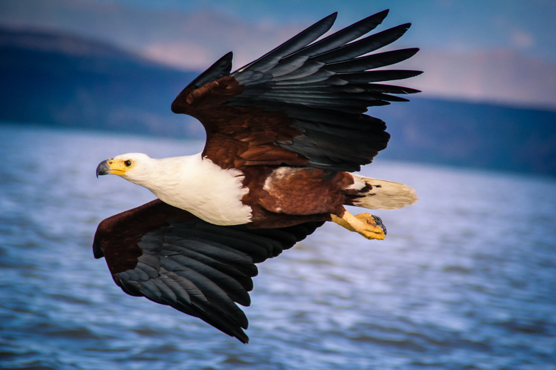 Eagle flyby -