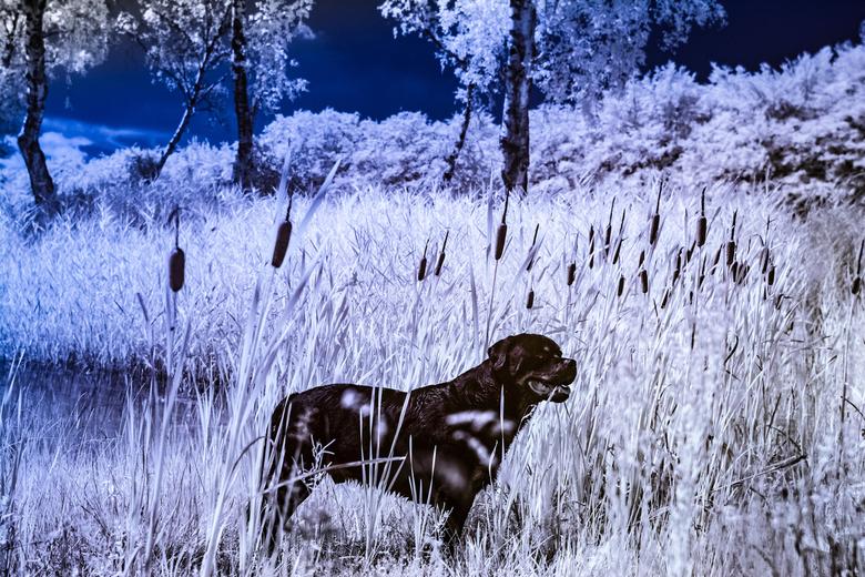 Full spectrum Rott - Mijn eerste shots met mijn zelf geconverteerde Full Spectrum Nikon d5200