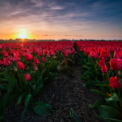 Perennial Reds