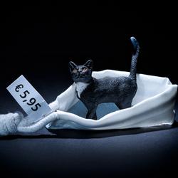 Een kat in de zak kopen