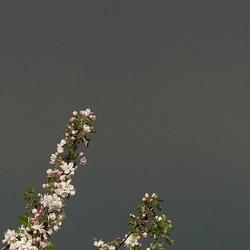 Kwetsbare bloesem