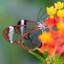 Botanic Garden Butterfly