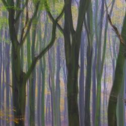 Feeëriek woud