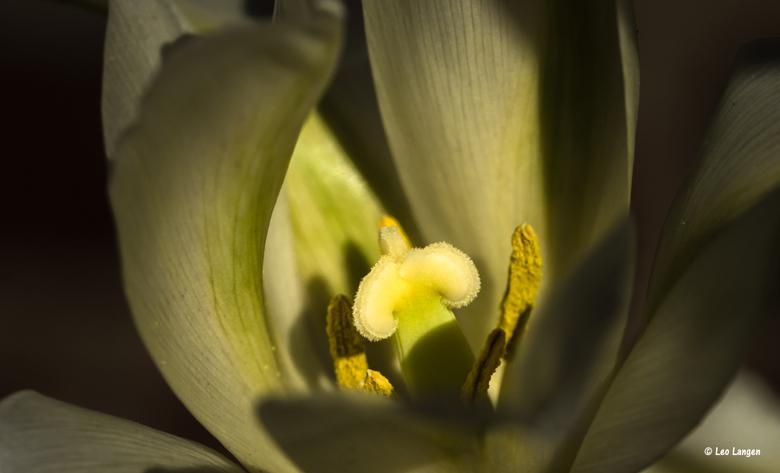 De tulpen waren bijzonder mooi dit jaar. - Bedankt voor alle leuke reacties.<br /> Blijft leuk om te lezen.<br /> Groetjes Leo