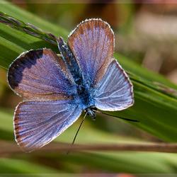 Zo mooi blauw
