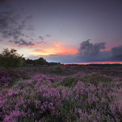 Zonsondergang met eerste paarse heide