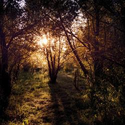 Zon tussen de bomen