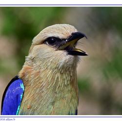 sing bluebird sing !