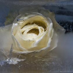 ijsbloem