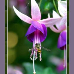 Wesp verzameld nectar