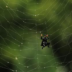 spiderman's identiteitscrisis