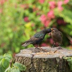 Vogels in de tuin