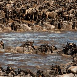 De Crossing van Kenia naar Tanzania _ Mara River - Tanzania.