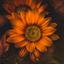 Zonnebloem te lang in de zon gestaan ...