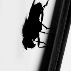 Darkfly