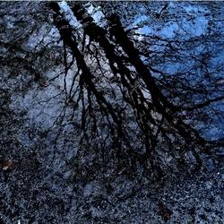origineel fairy creek