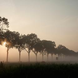 Bomenrij Mijnsheerenland