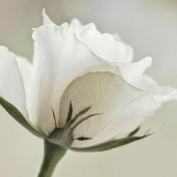 Whiteness...