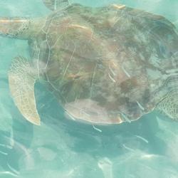 Turtle playa grandi