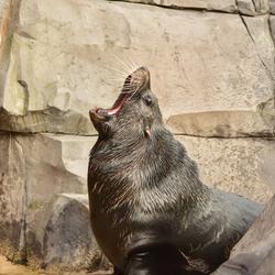 Wildland zeeleeuw