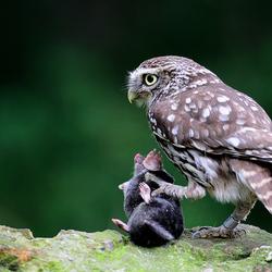Wildlife op eigen erf !