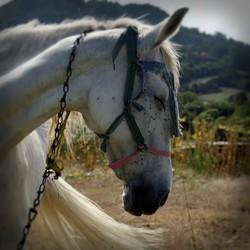 paard op Cyprus