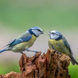 Liefde is ..... elkaar eten geven.