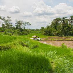 Sawa's Lombok