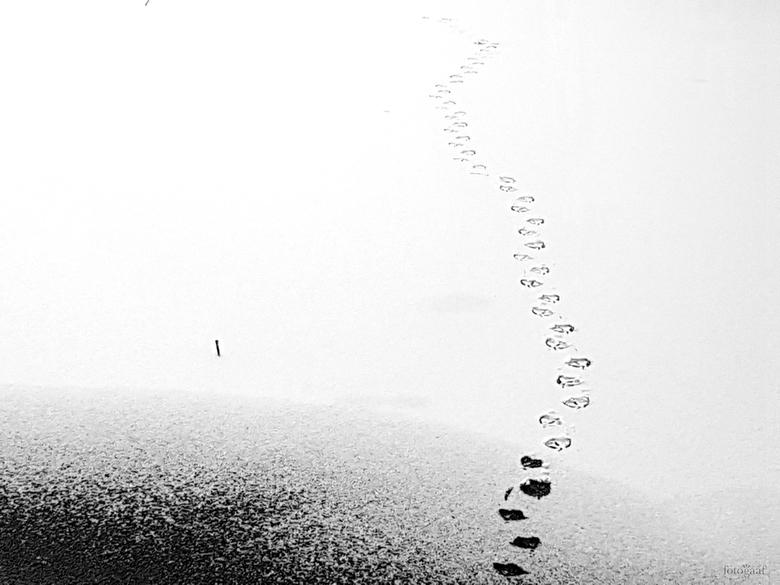 """Follow your own path - Volg je eigen pad....<br /> <br /> ...dat moet deze eend ook gedacht hebben <img  src=""""/images/smileys/smile.png""""/>"""