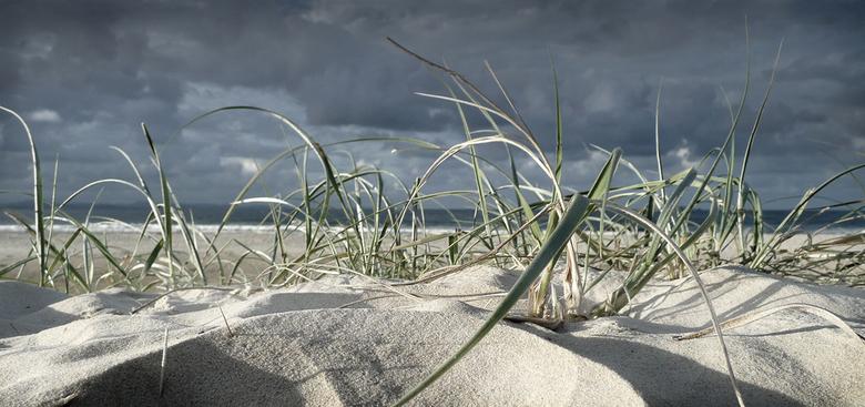 Strand - Het strand Bondy Beach in Australie