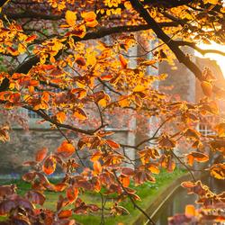 Herfstkleuren in de lente