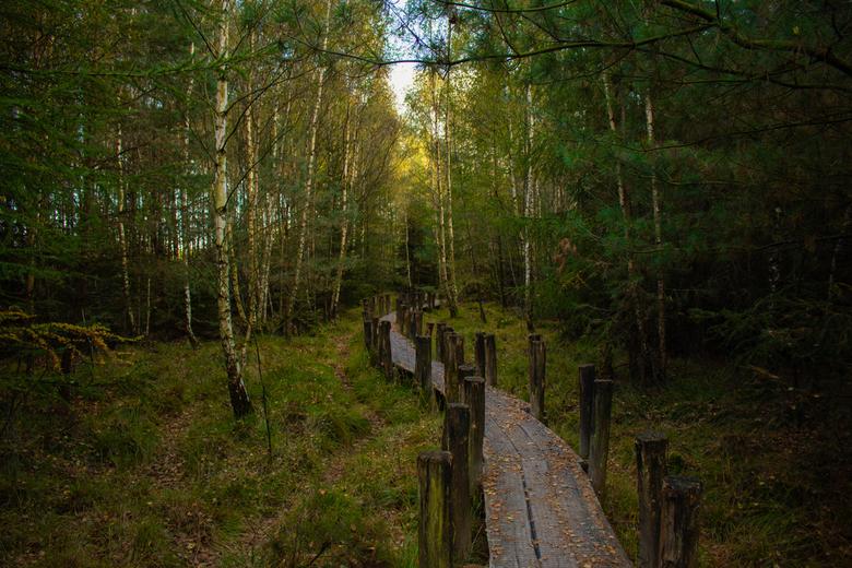 Vlonderpad Dwingelderveld - Het prachtige vlonderpad bij Dwingelderveld. Dit pad is aangelegd, zodat je geen natte voeten krijgt als het flink heeft g