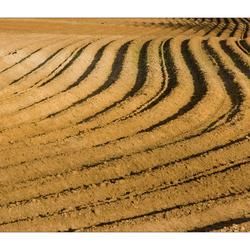 Aardappelveld (3)
