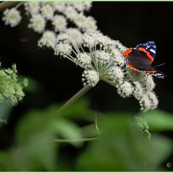 Mijn eerste vlinder op de gevoelige plaat.