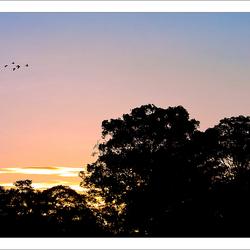Sepilok Sunset