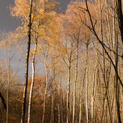 Herfst is goud!