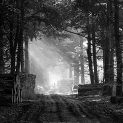 Wandeling in zwart wit