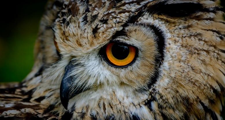 The eye of the eagle owl..3... - Veertjes tellen ........<br /> Deze is  ook de moeite waard om in het Groot te bekijken .......