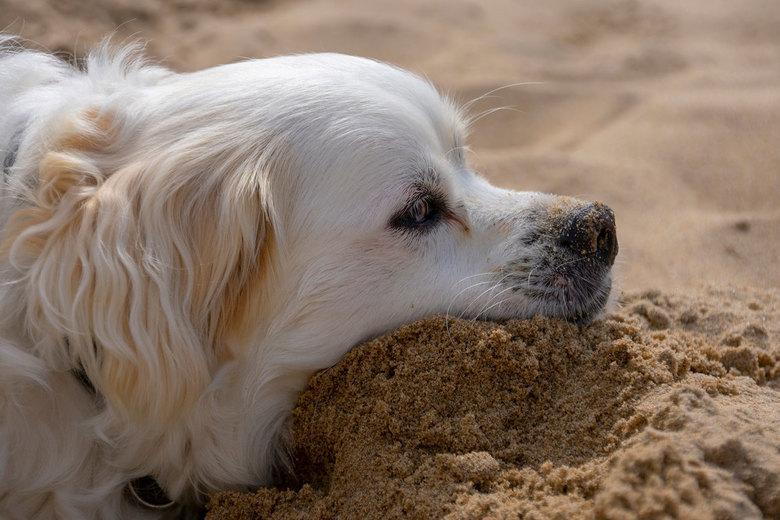 Leuke bodie - Willekeurig hondje op het strand