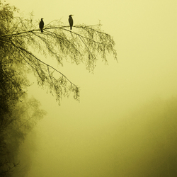 Vogels in mist