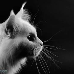 Pina, letterlijk in zwart / wit