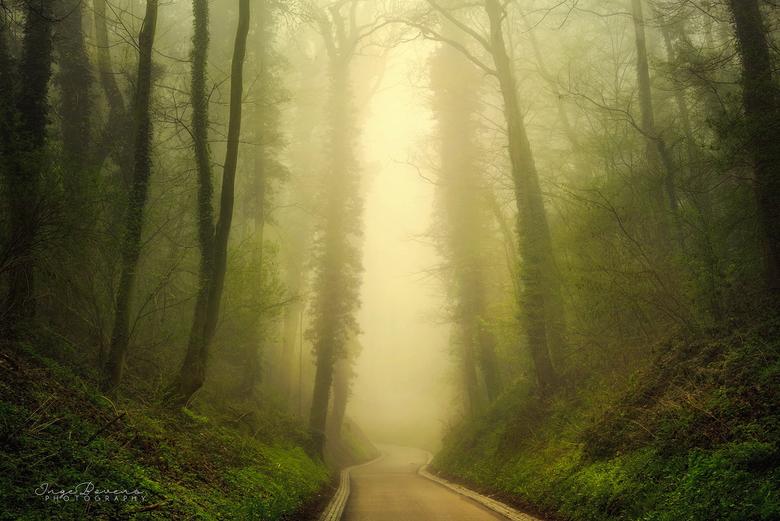 Patience. - Al vaak heb ik deze weg gefotografeerd, maar nog nooit heb ik hem gezien met zo'n dichte mist. Afgelopen donderdag was het eindelijk