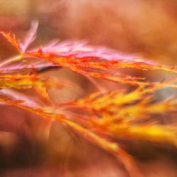 herfst vingers