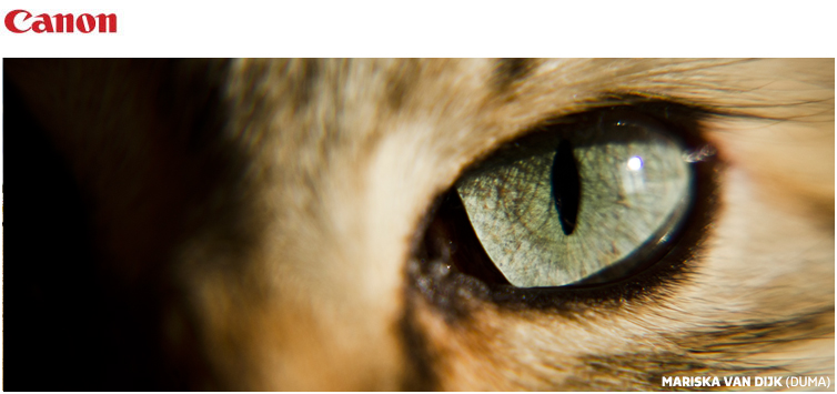 Canon fotowedstrijd: Dieren