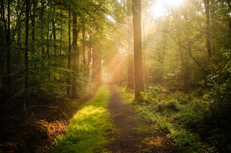 The Mystical Path  -
