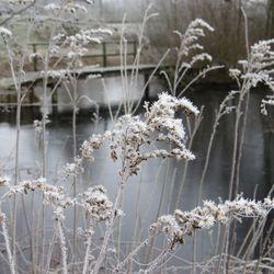 Winter in Meppel.jpg